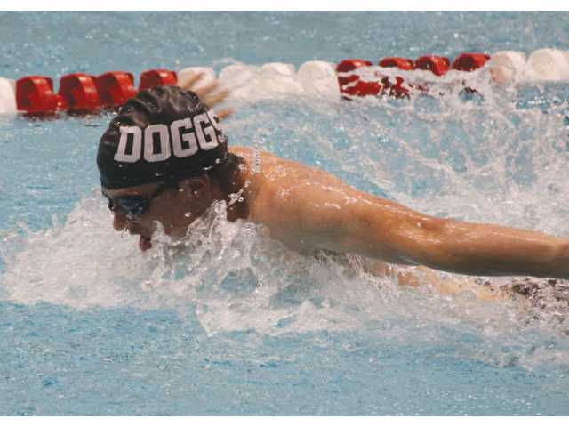 Cats and Doggs hit the pool well at Saturday's state finals