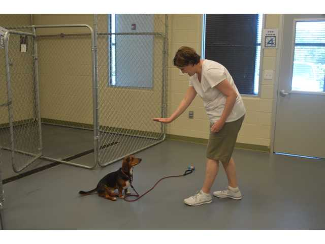 Barrow animal control implements changes, improvements