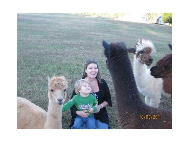 Alpaca, llama killed at Hoschton farm