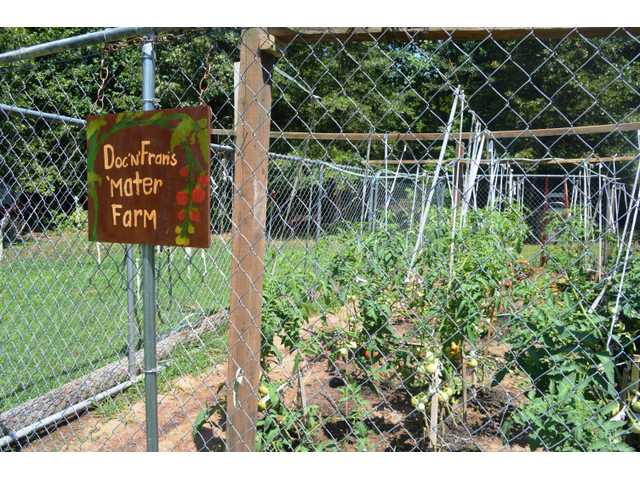 """Doc"" Skelton improves tomato-growing strategy"