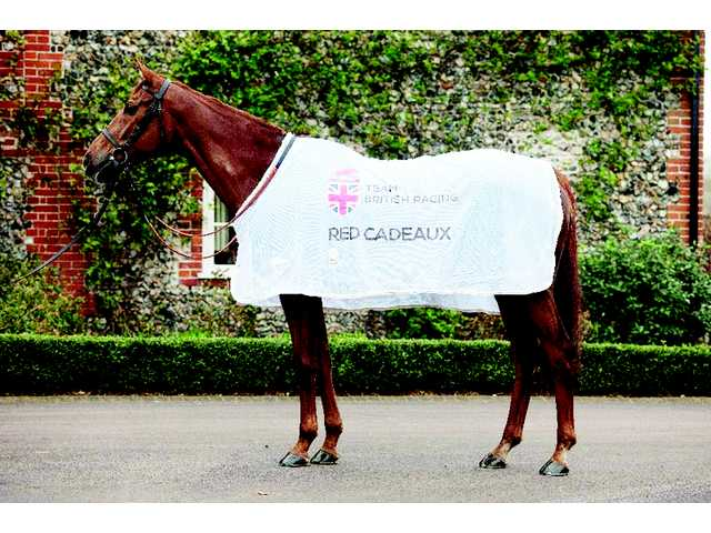 Going global, Fenwick Equestrian