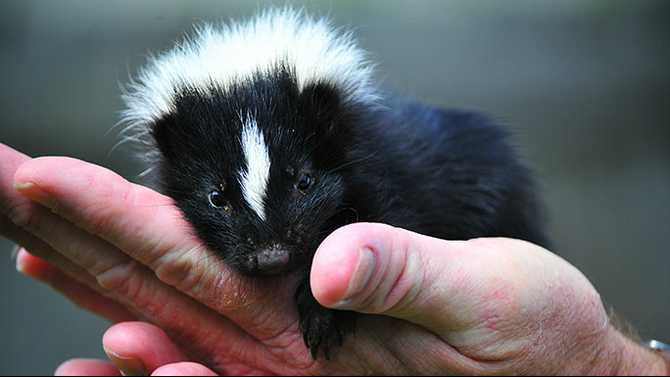 Class on rescuing wild baby animals