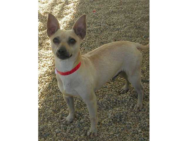 Adoptable dogs looking for homes this new year