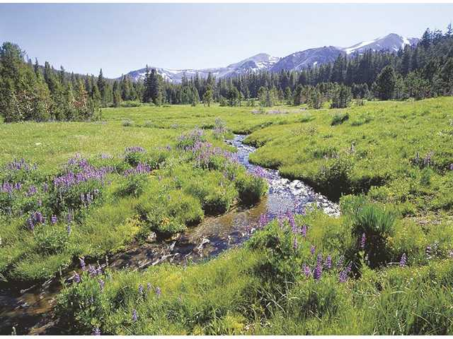 Congress preserves nation's wilderness