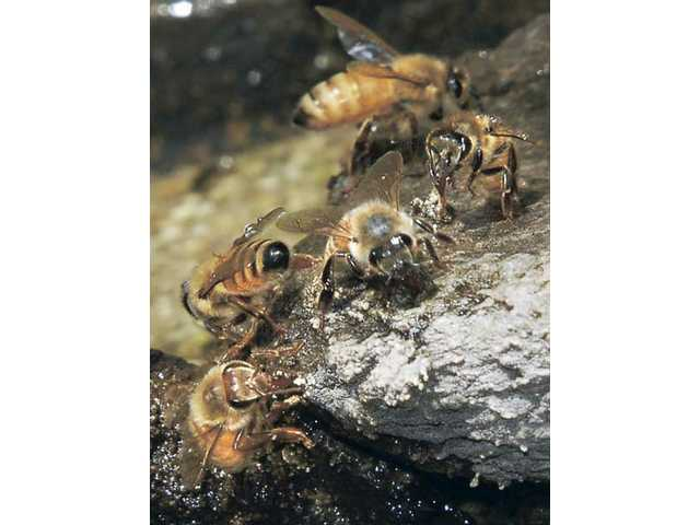 Bees bugging Castaic residents