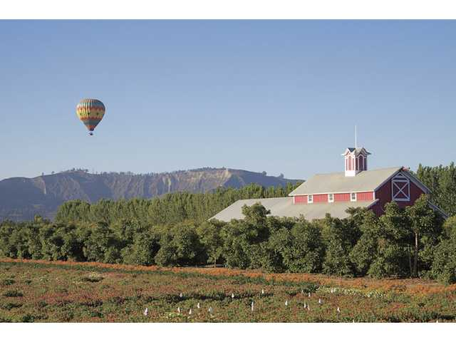 Citrus Classic Hot Air Balloon Festival in Santa Paula