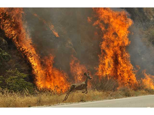 Wildlife seek refuge from flames