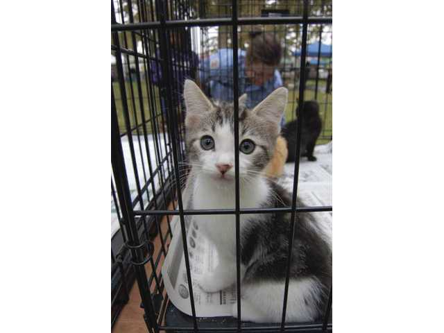 Pet Fair at Hart Park Sunday