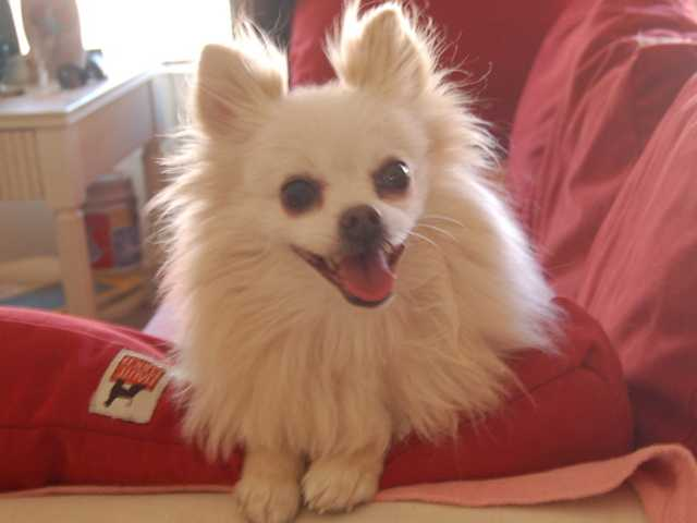 Featured Pets: A playful senior and a Pomeranian