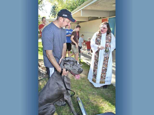 Churches bless for St. Francis