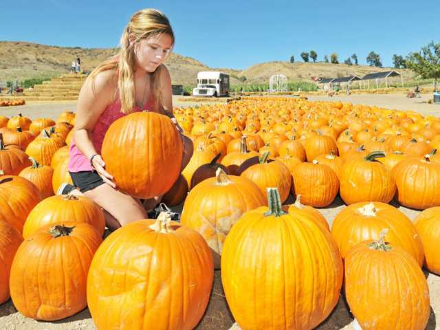 Pumpkin preparations
