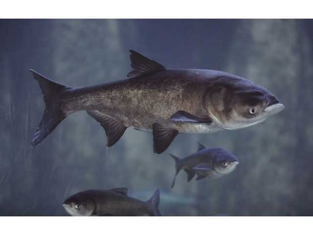 Judge tosses Asian carp suit; states can amend it