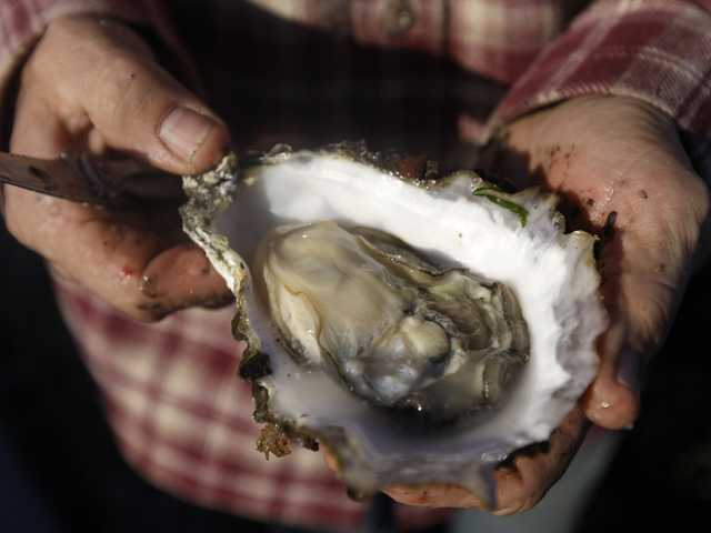 Judge upholds removal of Calif. oyster farm 