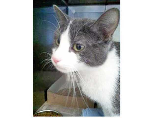 'Bella the cat' case continues
