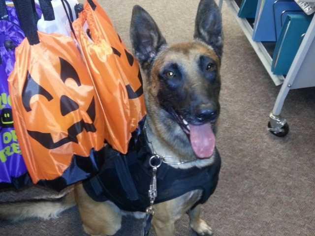 Fontana police dog injured in 2-story fall