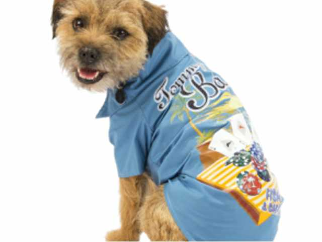 Dog day afternoon: dress your pooch for the beach