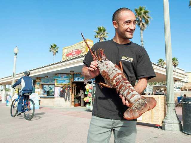 Swimmer nabs monster lobster off California coast