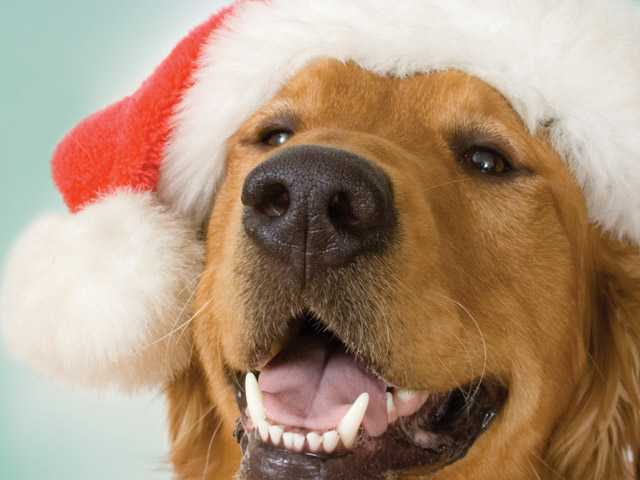 Avoid the holiday pet mischief