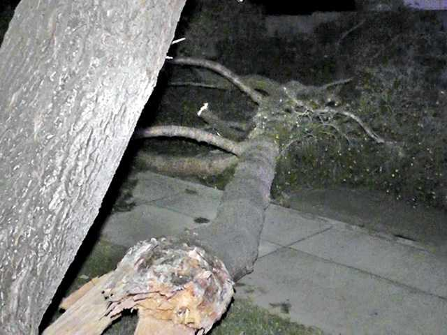 Winds topple a few trees in the SCV