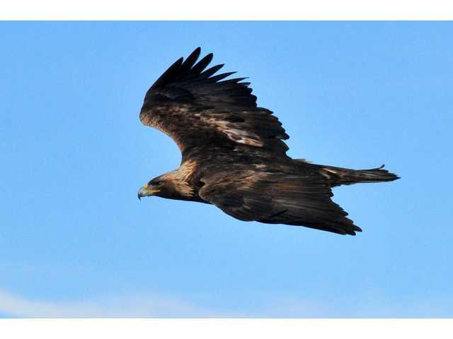 Feds nix eagle penalties for California wind farm