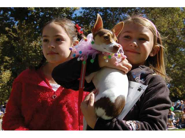 Free family fun at Bow-Wows & Meows pet fair