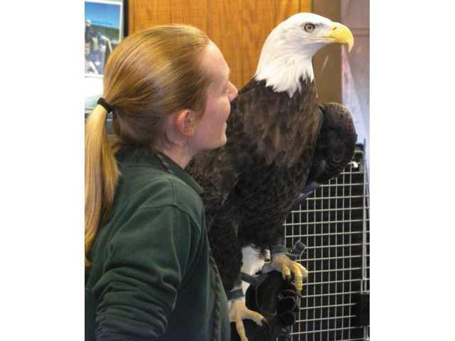 Bald Eagle Day returns to Ferryville on March 3