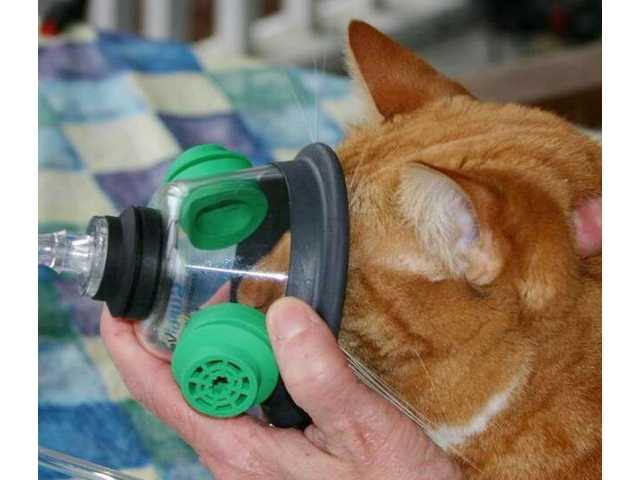 Camden Fire Department acquires pet oxygen masks
