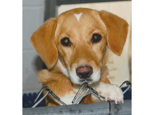 Pets of the Week -- Nov. 5, 2010