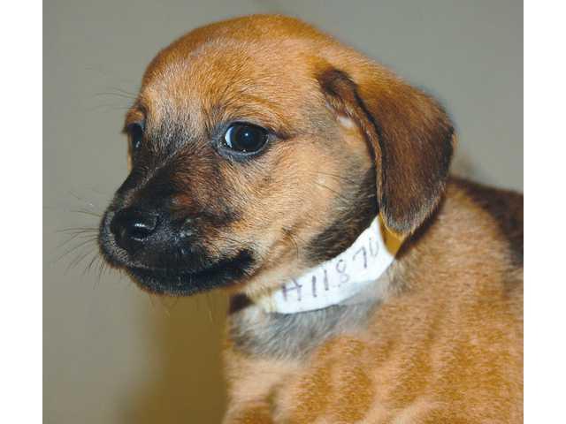 Pets of the Week - Nov. 26, 2010