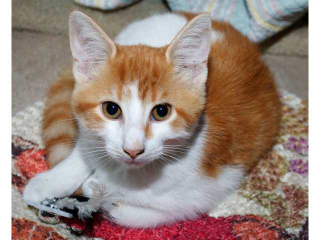 Pets of the week -- July 8, 2011