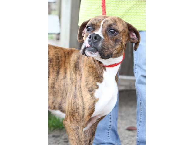Pets of the week -- Jan. 27, 2012