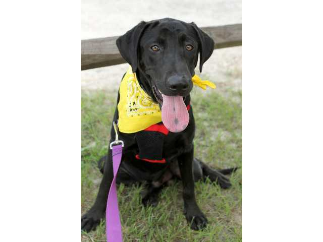 Pets of the Week -- Aug. 10, 2012