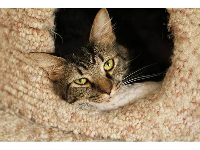 Pets of the Week -- Sept. 14, 2012