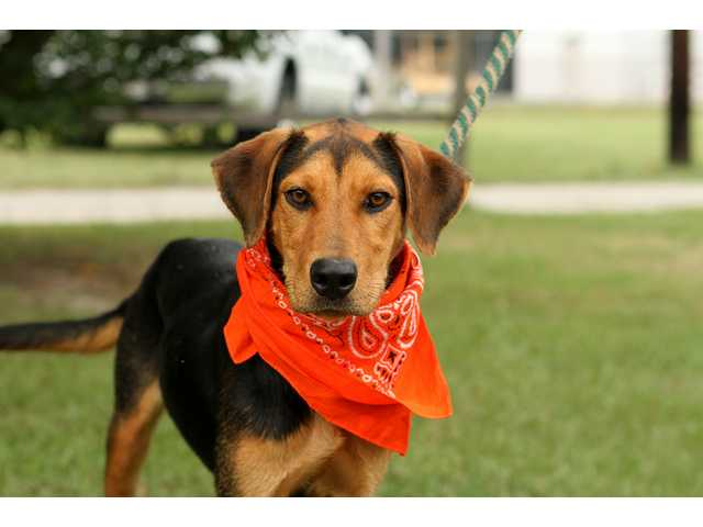 Pets of the Week -- Sept. 21, 2012
