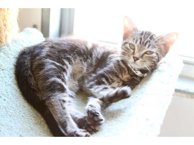 Pets of the Week -- Oct. 19, 2012