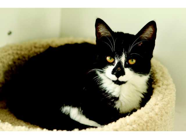Pets of the Week -- Nov. 2, 2012