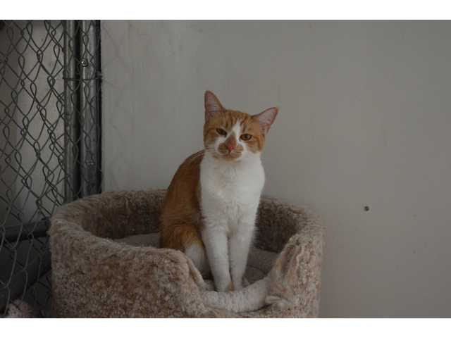 Pets of the Week -- Jan. 11, 2013