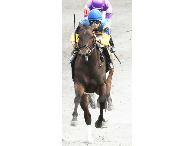 Wooten grad, Magical Moon, runs second in Beaumont