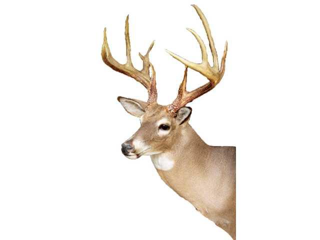Deer me!