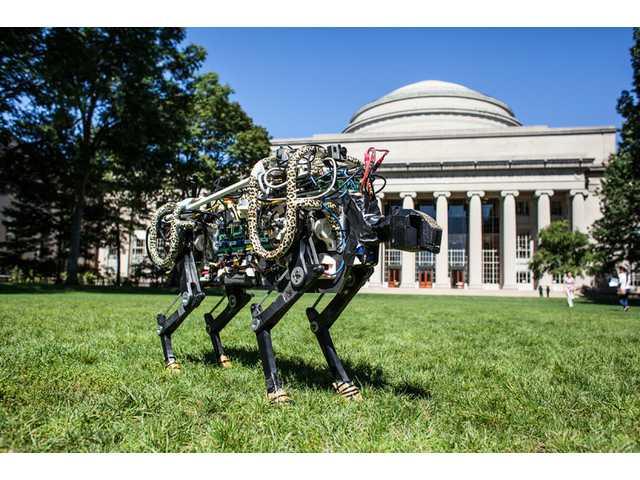 MIT unleashes cheetah robot on campus