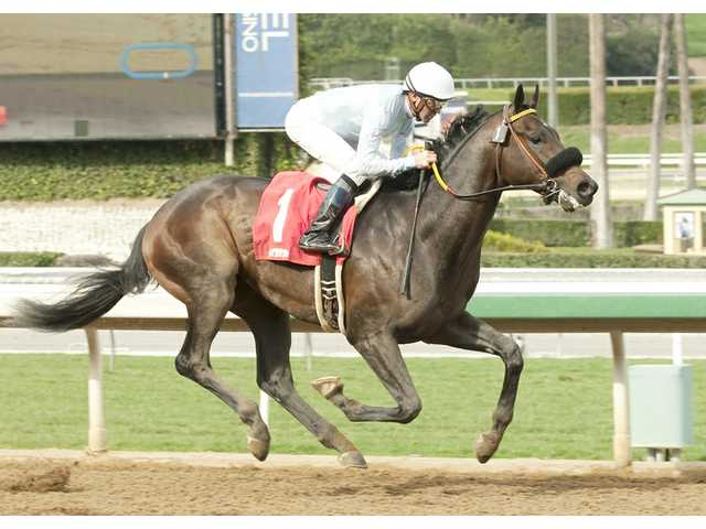 Horses with Camden ties to battle in San Felipe Stakes