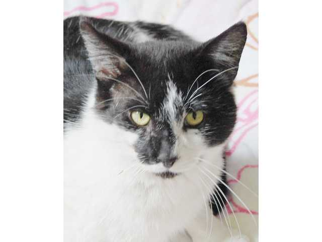 Pets of the Week - March 27, 2015