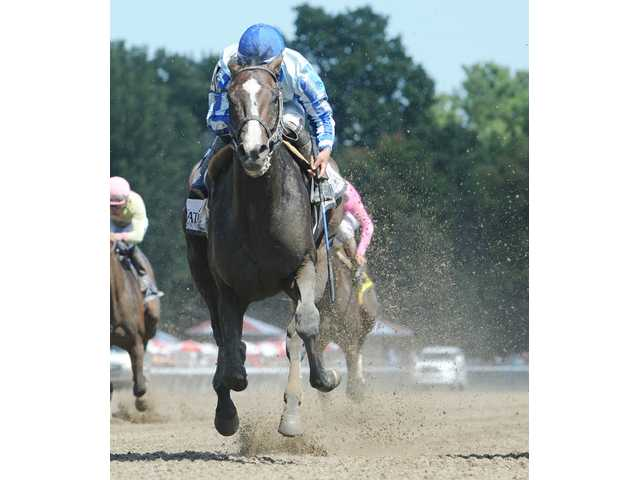 Cat Feathers, Upstart earn honors from N.Y. Thoroughbred Breeders