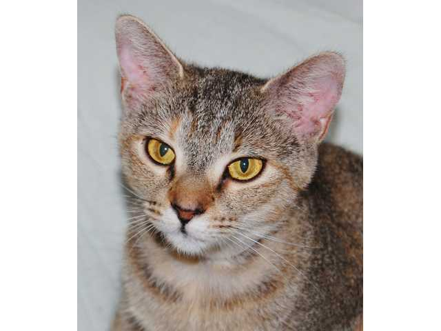 Pets of the Week - Aug. 21, 2015