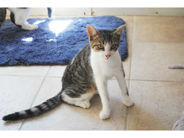 Pets of the Week - Oct. 9, 2015