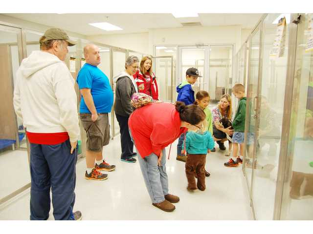 New pet adoption center opens