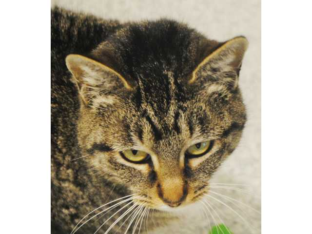 Pets of the Week - March 11, 2016
