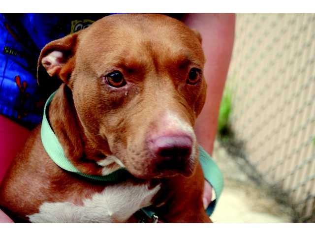 Shelter animals looking for a fur-ever home