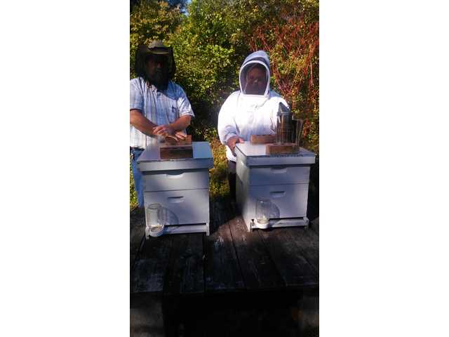 Getting the buzz on beekeeping