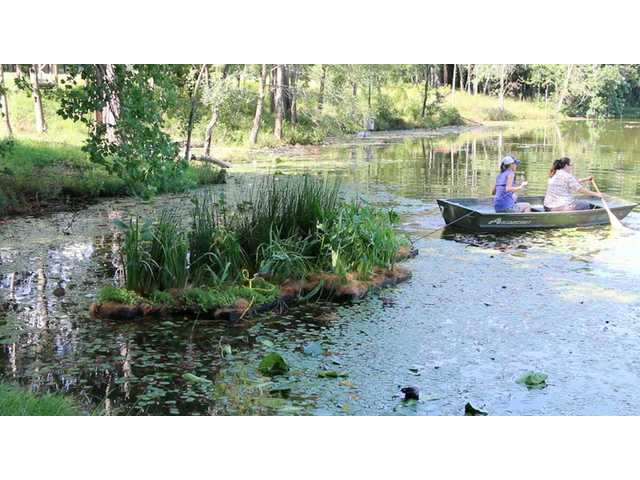 Clemson student from Camden takes part in wetland project